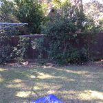 brushwood-fence-repair-killara3