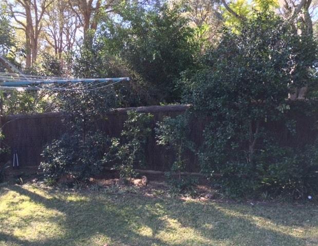 brushwood-fence-repair-killara3