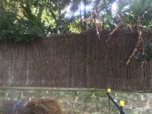 Brushwood-Fence-Repair-Before